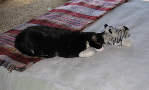 Spumoni the Cat and Tiger