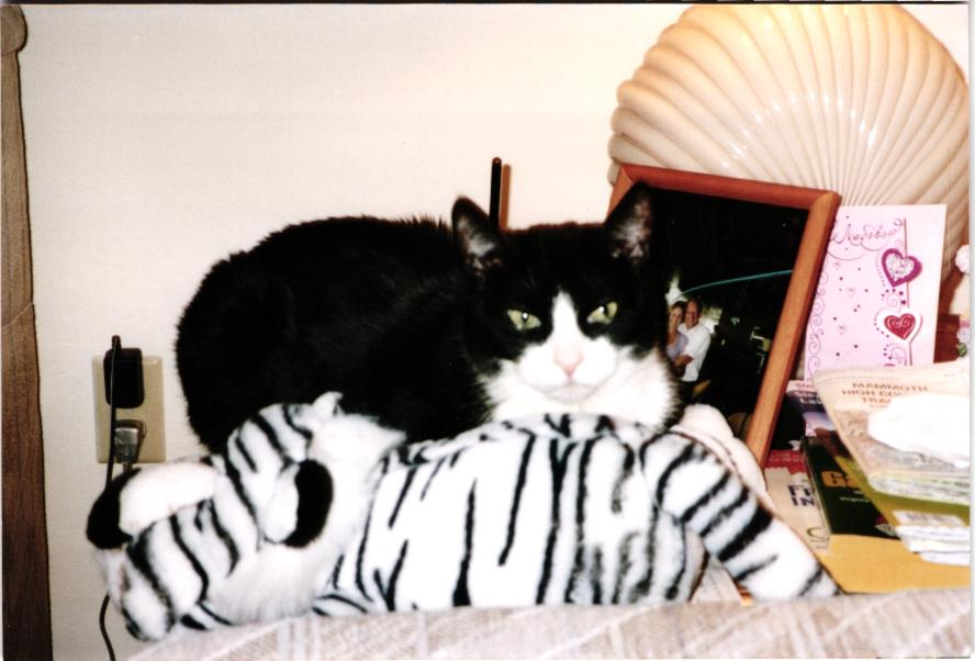 Spumoni the Cat and Tiger together